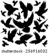 Set of diverse color silhouettes of flying birds of doves. - stock vector