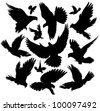 Set of diverse silhouettes of flying birds of doves. - stock vector