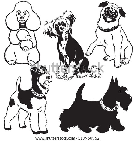 set of dogs,black and white vector collection with small breeds,pictures isolated on white background