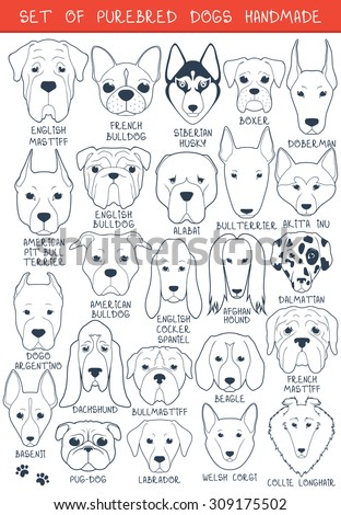 Set of 24 dogs of different breeds handmade. Head of dog. Icons with dogs. A sketch of animals. Doodle Dog. Set of isolated dogs for design. Dogs handmade. Alabai and Mastiff. Bulldog and pug. Pitbull - stock vector