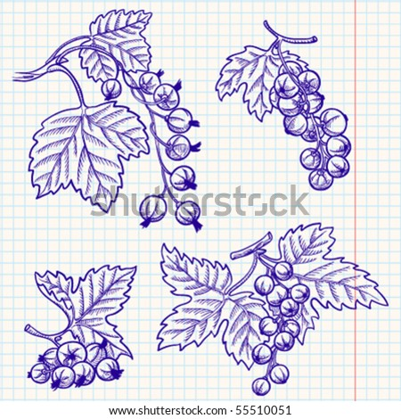 Set of doodle red and black currant - stock vector
