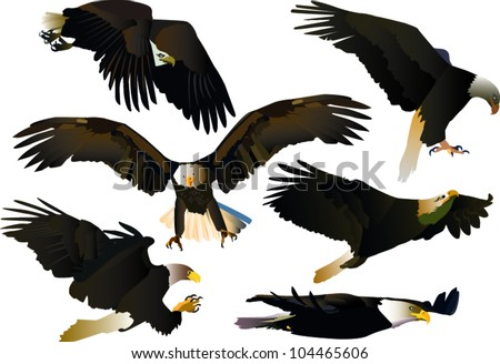 set of eagles - stock vector
