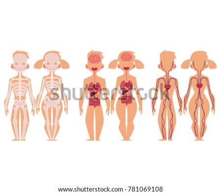 Set Educational Anatomy Chart Infographics Skeleton Stock ...