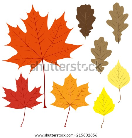 Set of eight vector leaves for your design - stock vector