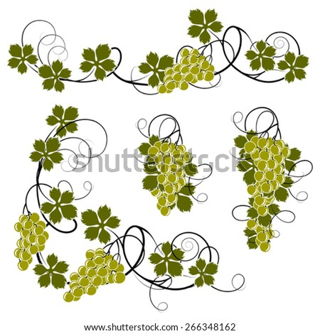 Set of elements from the vine for decoration - stock vector