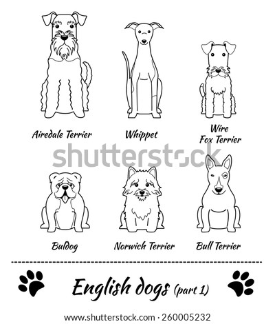 Set of English dogs black and white - part 1. Vector Illustration of six different breeds of dogs: Airedale Terrier; whippet; Wire Fox Terrier; Bull Terrier; Norwich Terrier; bulldog. - stock vector
