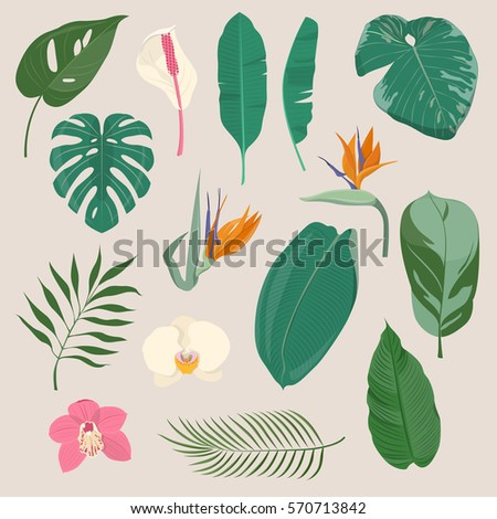 Set of exotic tropical leaves and flowers. Colorful floral collection