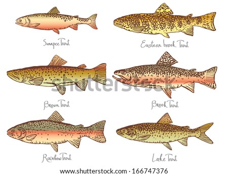 Set of fish - Illustration - stock vector