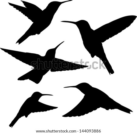 set of five detailed black hummingbird silhouettes isolated on white - stock vector