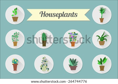 Set of flat vector icons. House plants. Vector illustration - stock vector