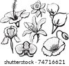 Set of flower heads - stock vector