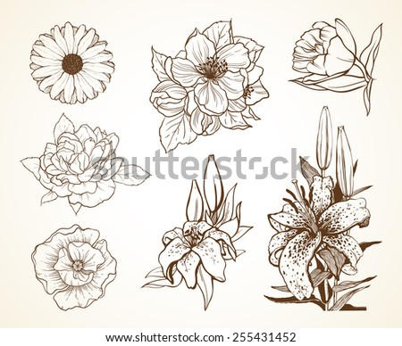 Set of flowers poppy daisy peony lily tulip. Sketch vector illustration - stock vector