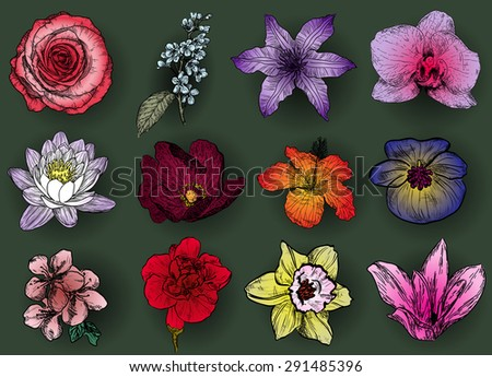 Set of flowers: rose, bird cherry tree, lilac, clematis, orchid, lily, hibiscus, violet, sacura, carnation, narcissus and magnolia - stock vector