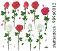 Set of flowers white and red roses isolated on white background. Vector illustration - stock vector