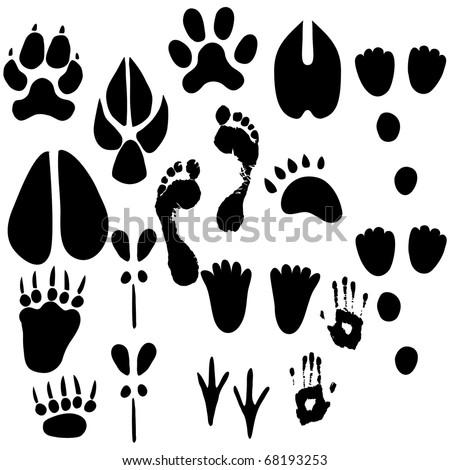 Set of footprints - stock vector