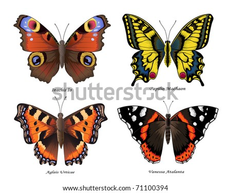 Set of for most beautiful butterflies, vector illustration - stock vector