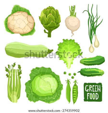Set of fresh green vegetables, healthy and organic food collection with cauliflower, cabbage, artichoke, onions, garlic, salad, squash, cucumber and celery - stock vector