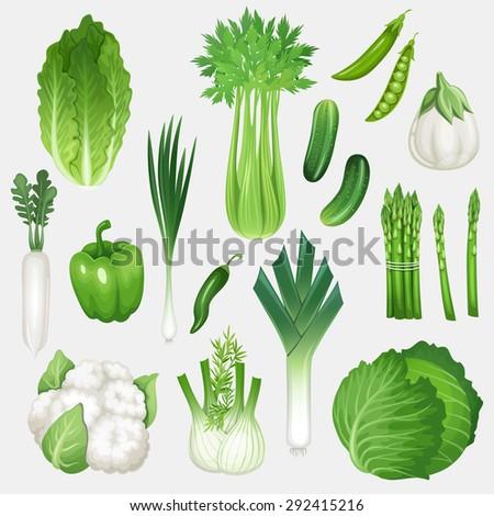 Set of fresh green vegetables. Healthy food vector illustration. - stock vector