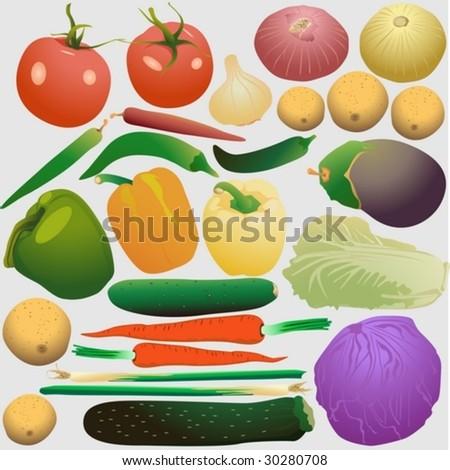 Set of fresh vegetables - stock vector