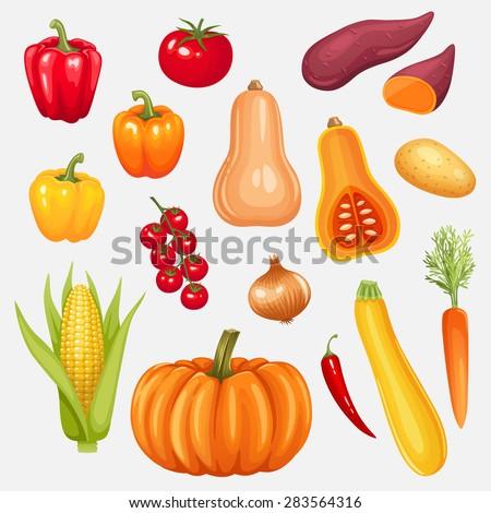 Set of fresh vegetables. Vector illustration. - stock vector