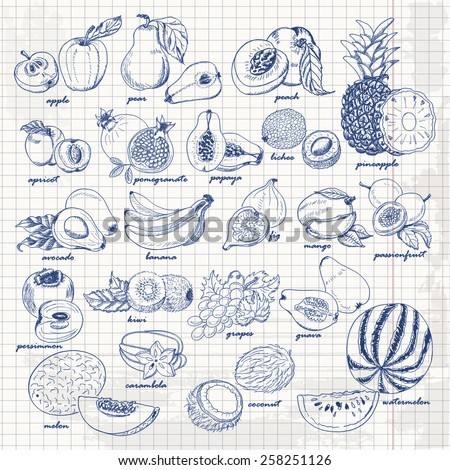 Set of fruits on paper. Vector hand drawing sketch illustration. Vector illustration for your design - stock vector