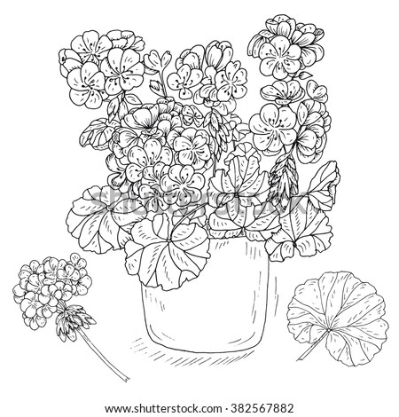 set of geranium flowers vector hand drawn inky potted geranium leaf and branch