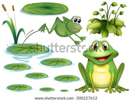Set of green frog and water lily - stock vector