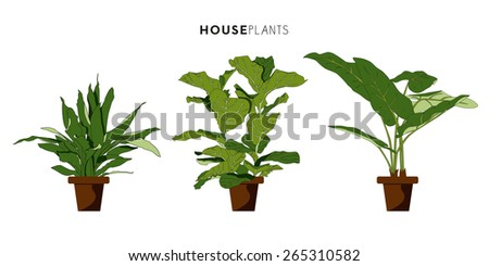 Set of green house or room plants with brown plant pot isolated on white background. Vector and illustration design.  - stock vector