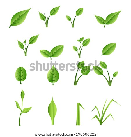Set of green leaves - stock vector