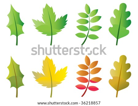 Set of green leaves and autumn leaves