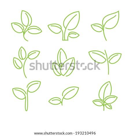 Set of green leaves design elements. Vector illustration. - stock vector
