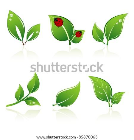 Set of green leaves. Element for design. - stock vector