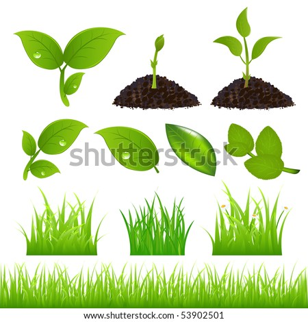 Set Of Green Leaves, Grasses And Sprouts