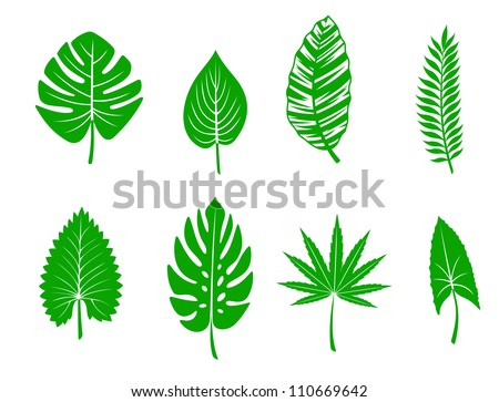 Set of green tropical leaves. Vector illustration - stock vector