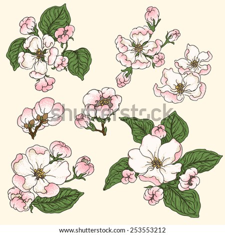 Set of hand-drawn flowers of blooming apple - stock vector