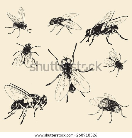 Set of hand drawn fly, vector illustration
