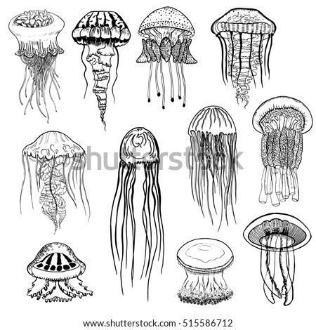 set of hand drawn jellyfish vintage collection of isolated black and white marine fauna