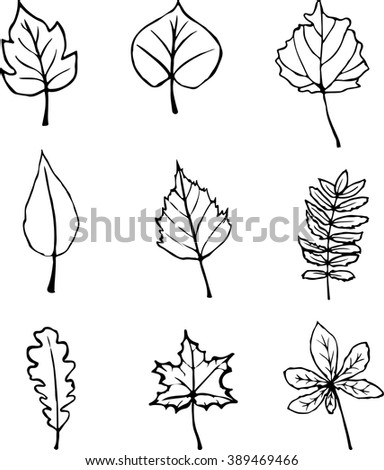 Set of hand drawn leaves. Vector illustration.