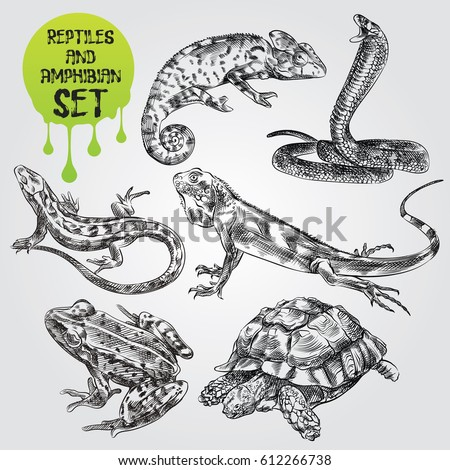 Set Hand Drawn Reptiles Amphibian Isolated Stock Vector ...