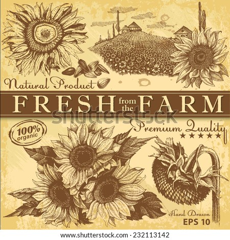 Set of hand drawn sunflowers on vintage paper - stock vector