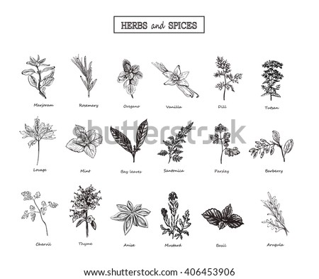 Portfolio 1097037 as well Doodle House Plants Vector Seamless Pattern 507677083 moreover Ostara furthermore Timber Paving And Decks moreover Heather plant. on herb garden in pots