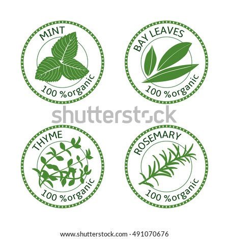 Set of herbs labels. 100% organic. Greenery collection. Vector illustration. Rosemary, mint, bay leaves, thyme.