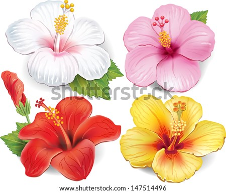 Set of Hibiscus - stock vector