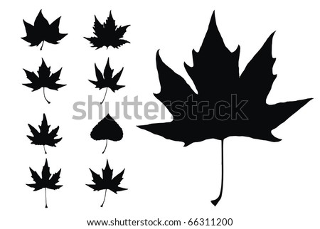 set of high quality leafs vector illustration - stock vector