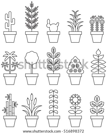 Image Result For Houseplant Palm