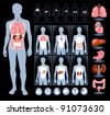 Set of human anatomy parts: liver, heart,  kidney, lung, stomach and esophagus - stock photo