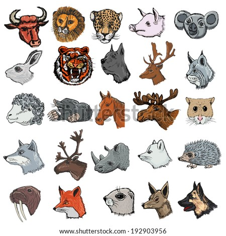 set of illustrations of different kinds of mammals - stock vector