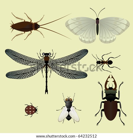 Set of insects. Vector.