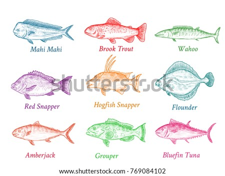 Set of isolated colorful hand drawn fish with names. Sketch of tuna, trout, snapper etc.