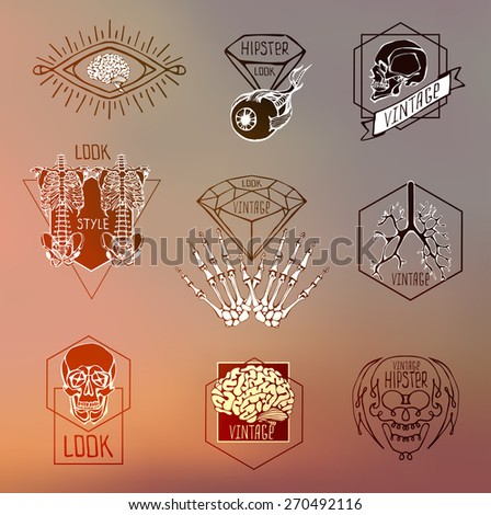 Set of Labels with human skeleton and anatomy - stock vector